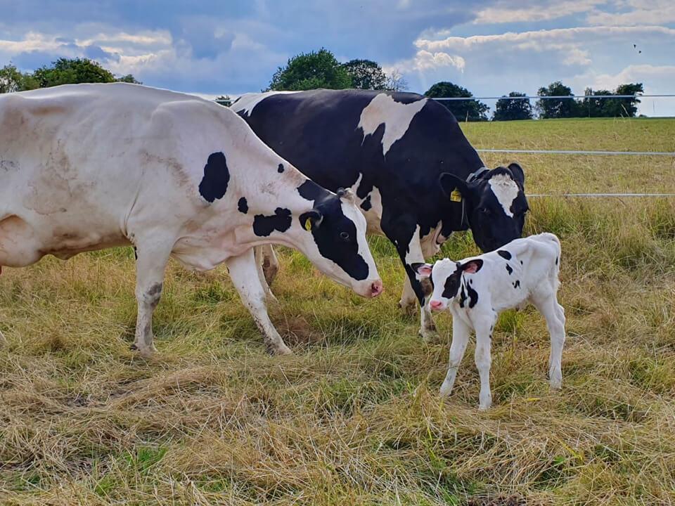 Ökologische Milchviehaltung